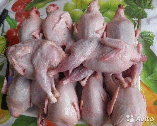 Продается перепелиное мясо