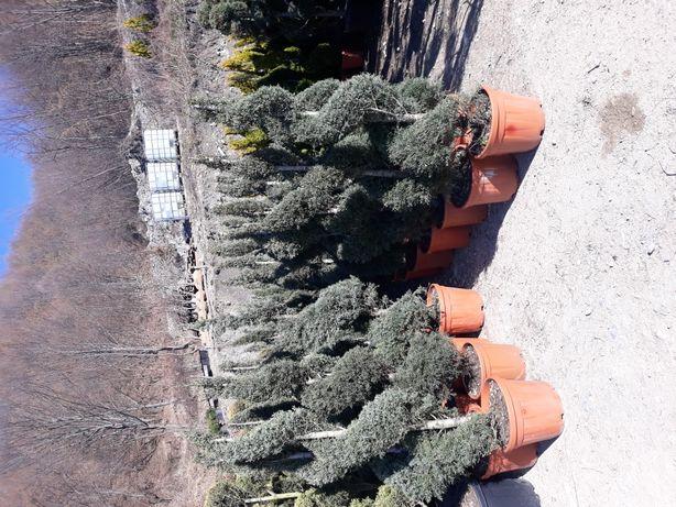 Plante ornamentale det la tel