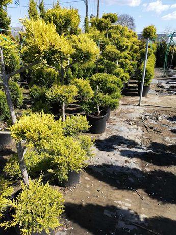 Продавам градински дръвчета на 7 години