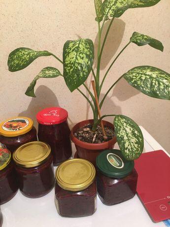 Варенье из смородины и малины из сбора этого года