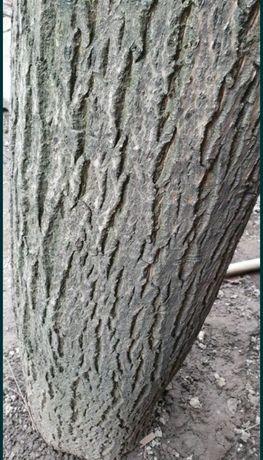 Продам огромнейшее ценное дерево грецкого ореха 40лет на мебель