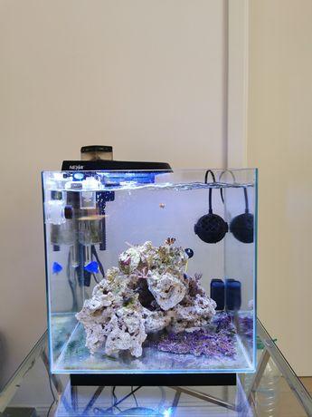 Vând acvariu pești 50×50 cm
