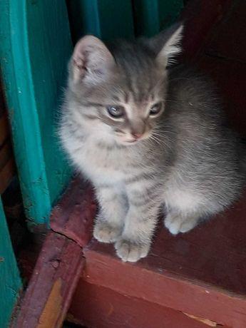 отдам домашних котят в добрые руки, мальчик и девочка