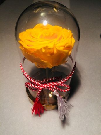 Trandafir criogenat galben xxl