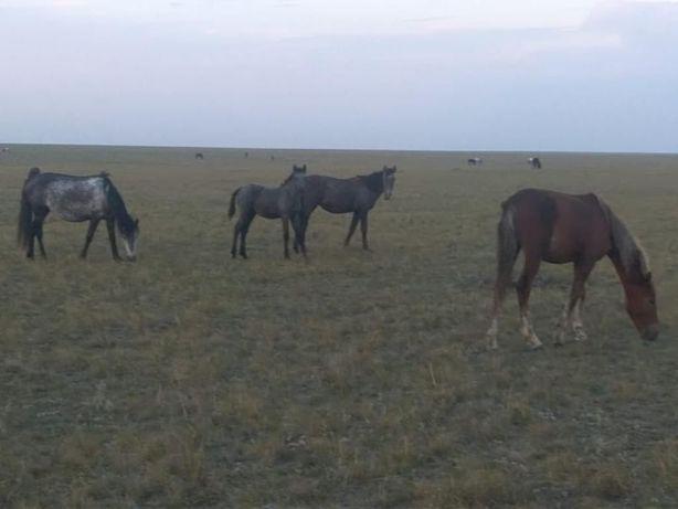Продам лошадей, цена от 300 тыс.