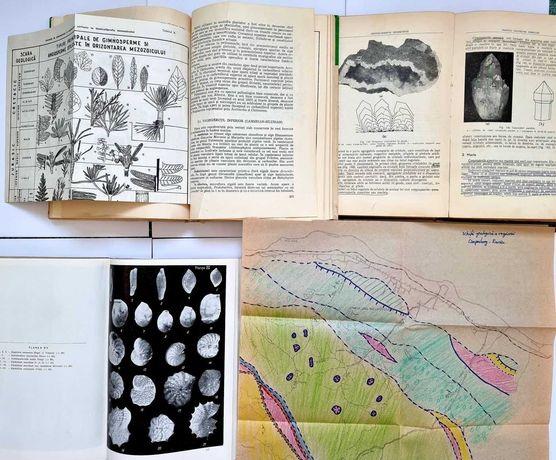Petrologie Magmatica, Mineralogie Cristalografie Palinologie
