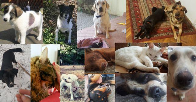 Pet sitter Timisoara / ingrijire caini si pisici la domiciliu
