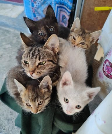 Отдадим котят в добрые руки.