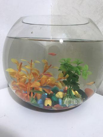 Рыбки и аквариюм