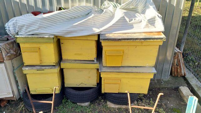Vand 4 cutii stupi pe 10 rame si 2 cutii pe 16 rame, stare buna
