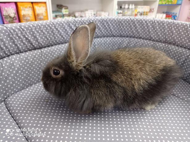 кролик молодой и активный.