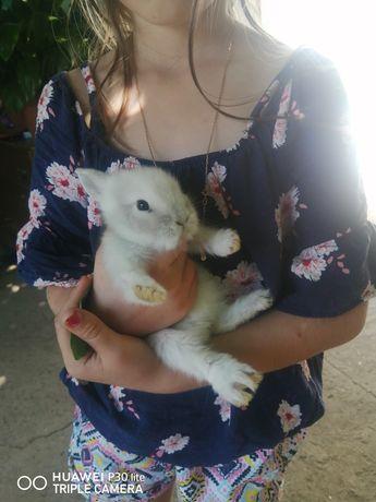 Кролики кролики уф