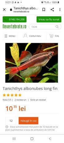 Pesti tanichthys albonubes