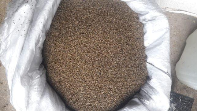 Жонышка урыгы (Семена люцерны)