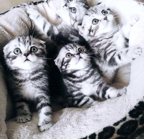 Роскошный Помет Шикарнейших Плюшевых Котят