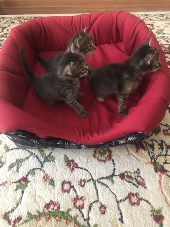 Отдадим котят в добрые руки. 1 мальчик и 1 девочка.
