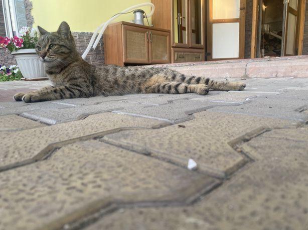 Кошка Кошка кошка