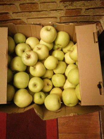 Продам яблока зеленный
