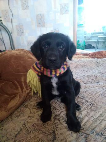 Продам щенка Спаниель