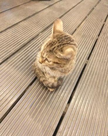 Котёнок срочно ищет дом.
