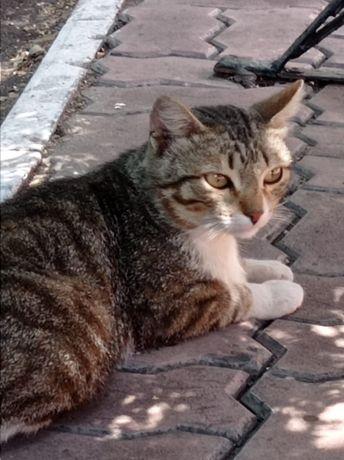 Котик ищет дом!!