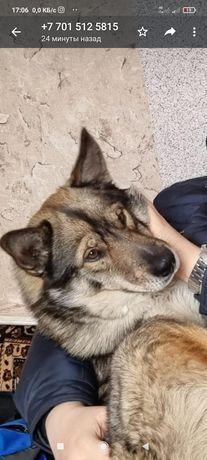 Пропала собака Сарань
