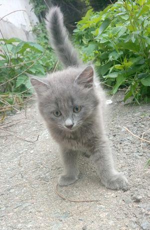 Котята очень ждут своих любимых хозяев