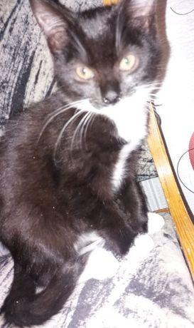 Котик 2 месяца нужен дом