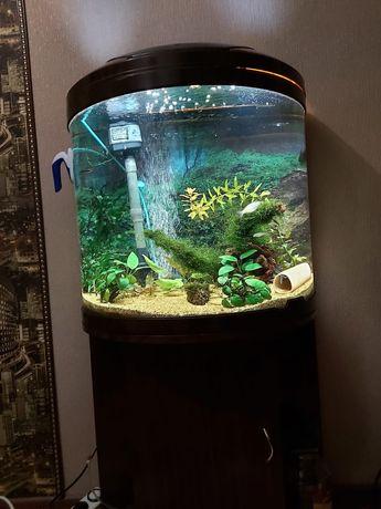 Продам аквариум цена 50000