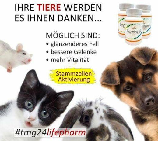 Laminine pentru întreținerea sănătății la câini și pisici