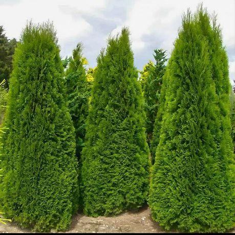 Amenazez gradini spati verzi cu plante si gazon