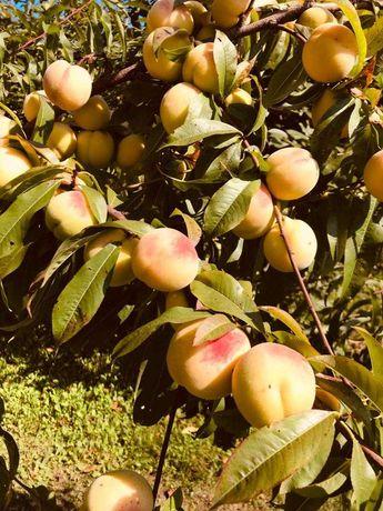 Piersici de toamnă si mere diverse soiuri