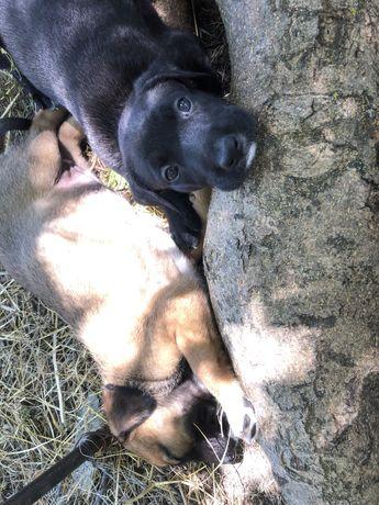 Ofer spre adoptie caini