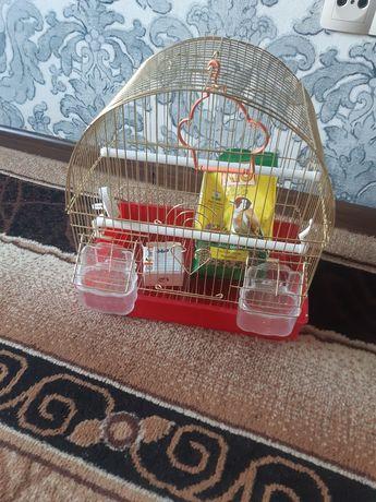 Продам клетку для птицы