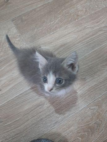 Отдам котёнка бесплатно