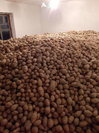 Картоп оптом 180кг  Шиели
