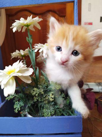 Милые котята! В добрые руки!