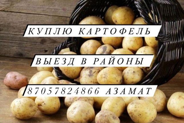 Куплю Картофель Кокшетау СКО