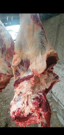 Продам мясо свежий молодняк