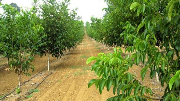 Плодоотдавща Орехова градина