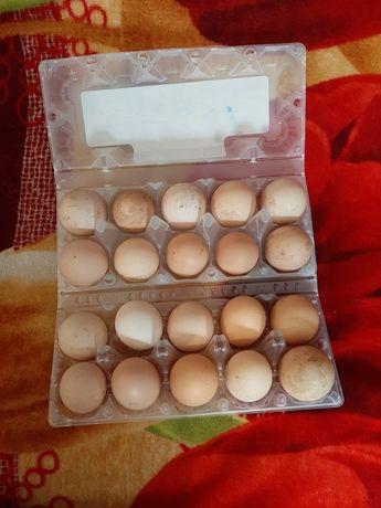 Продам инкубационые яйца