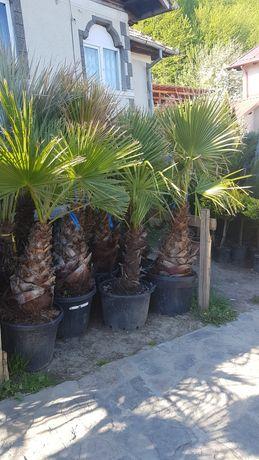 Vă oferim o gama foarte mare de plante ornamentale prețuri accesibile