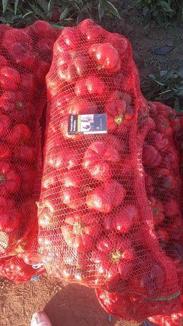 Gogosar capia vinere gras