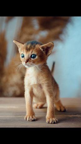 Абик котик красивый малыш
