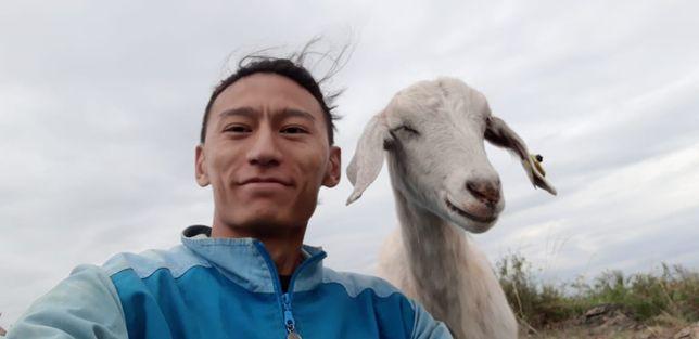 Нубийская коза продам