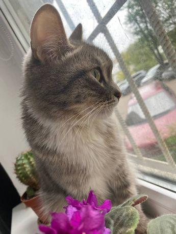 СРОЧНО отдам в ДОБРЫЕ РУКИ умную и красивую кошку!