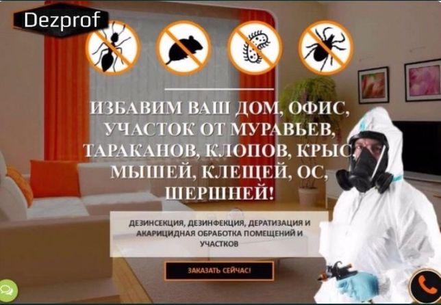 Дезинфекция уничтожение клопов термитов тараканов