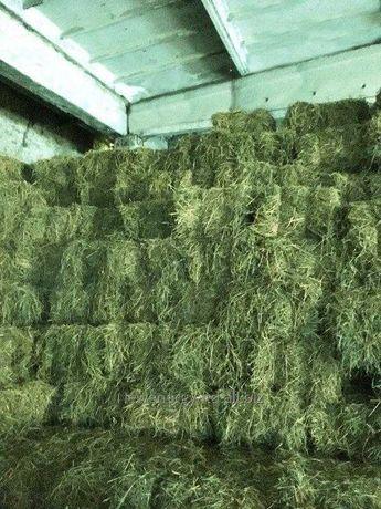 Мы продаем сено клевер луговой разные травяное