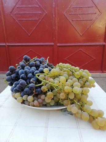 Vând struguri albi și negri pentru vin