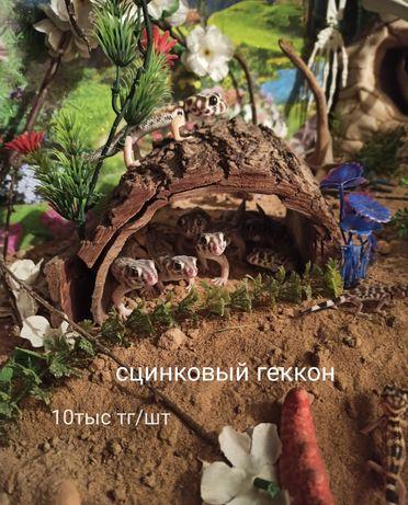Домашний питомец геккончик